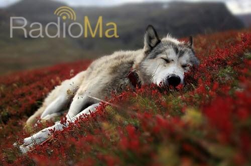 مرگ گرگ - رادیو ما